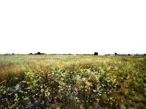 MARSHALL Road Property Photo - McIntosh, NM real estate listing