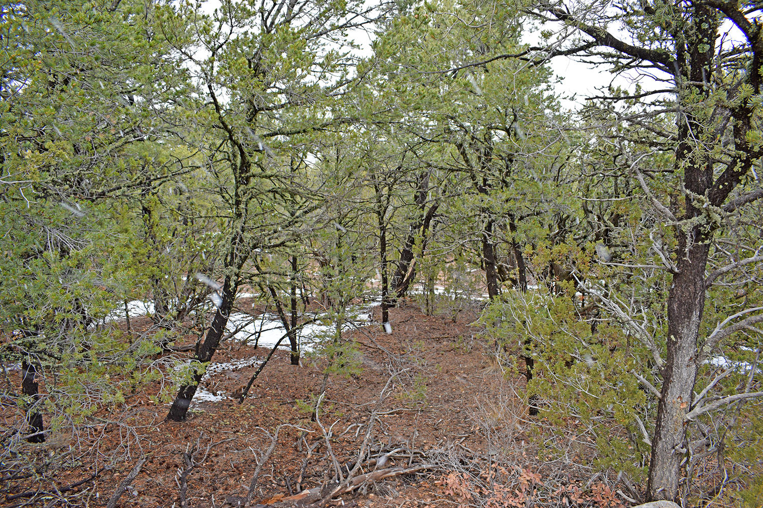 Lot 17 Tecolote Loop Property Photo - Tajique, NM real estate listing
