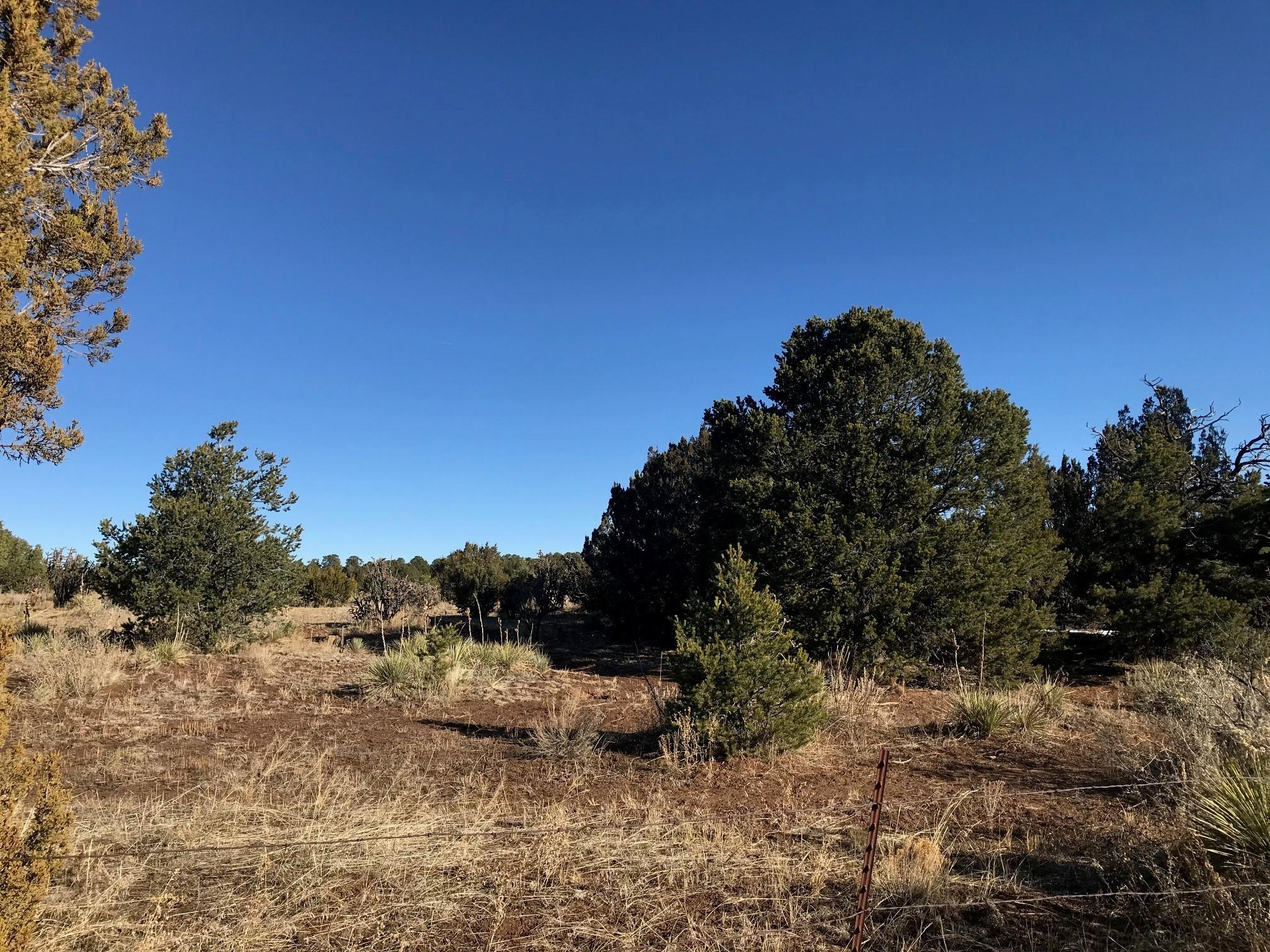 781 NEW MEXICO 217 Property Photo - Tijeras, NM real estate listing