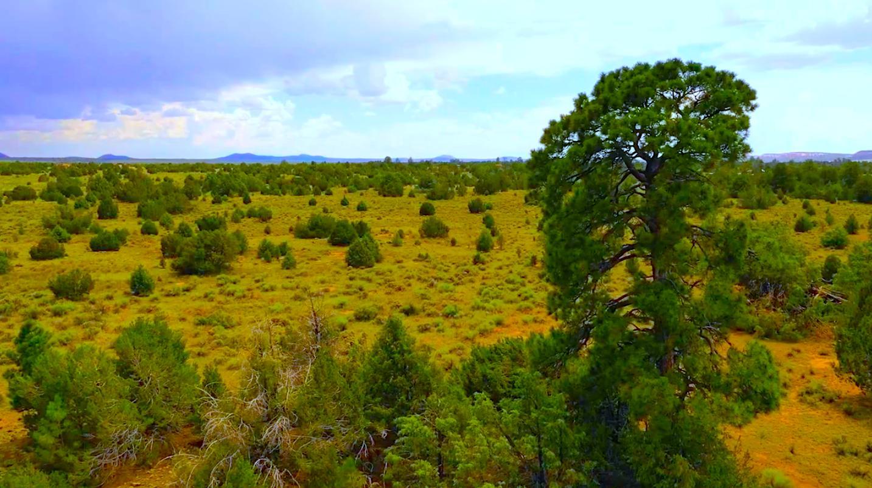 Flora Property Photo - Ramah, NM real estate listing