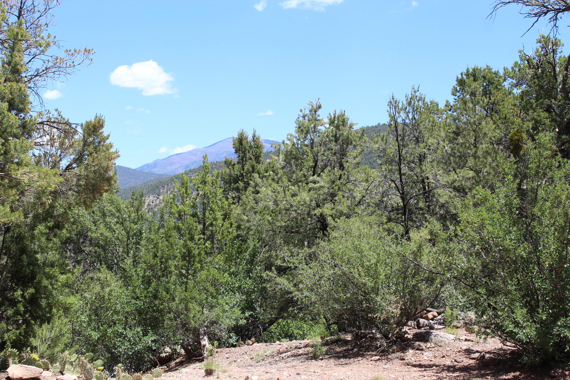 Oso Road Property Photo - Jemez Springs, NM real estate listing