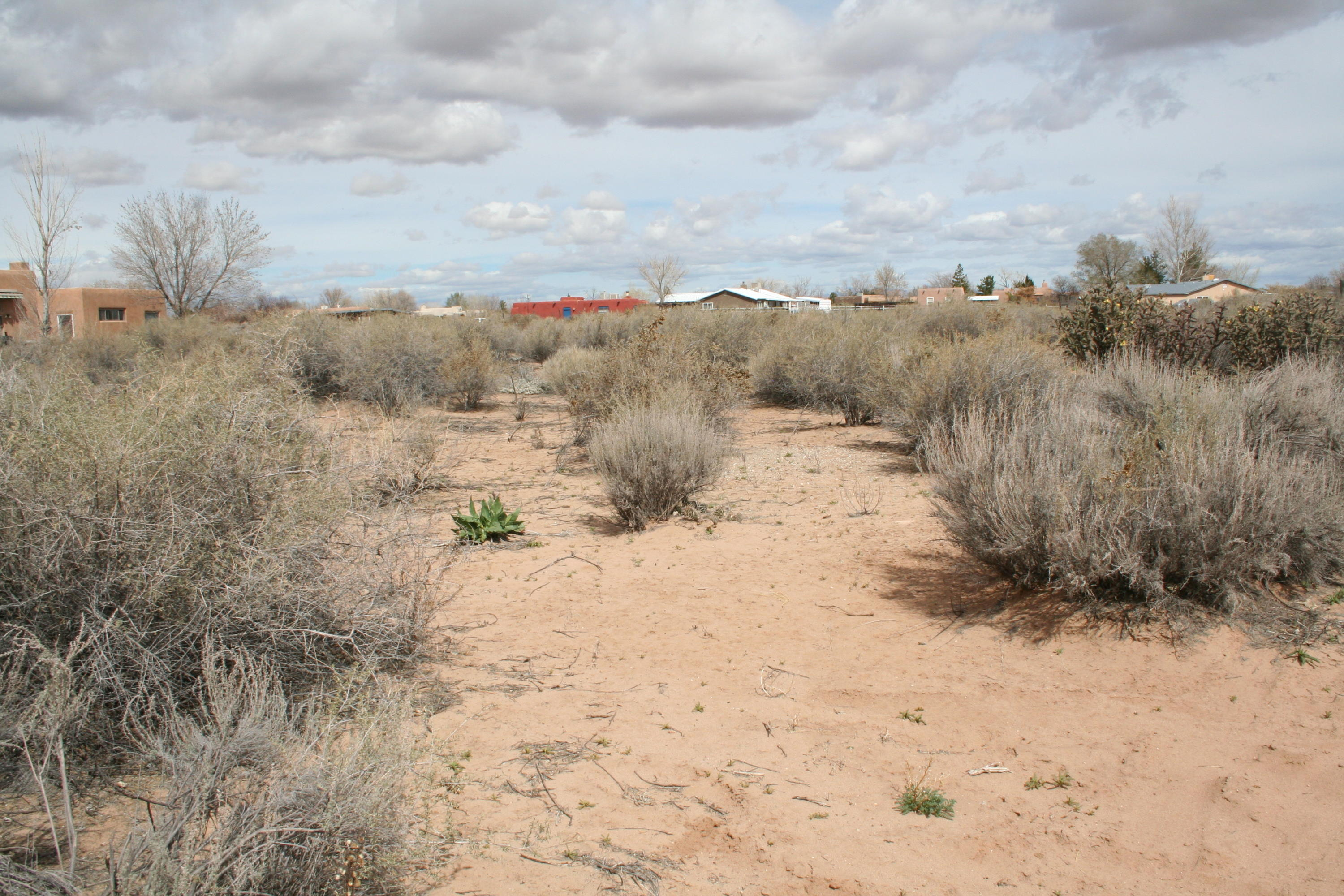0 Lonesome Dove Property Photo - Corrales, NM real estate listing