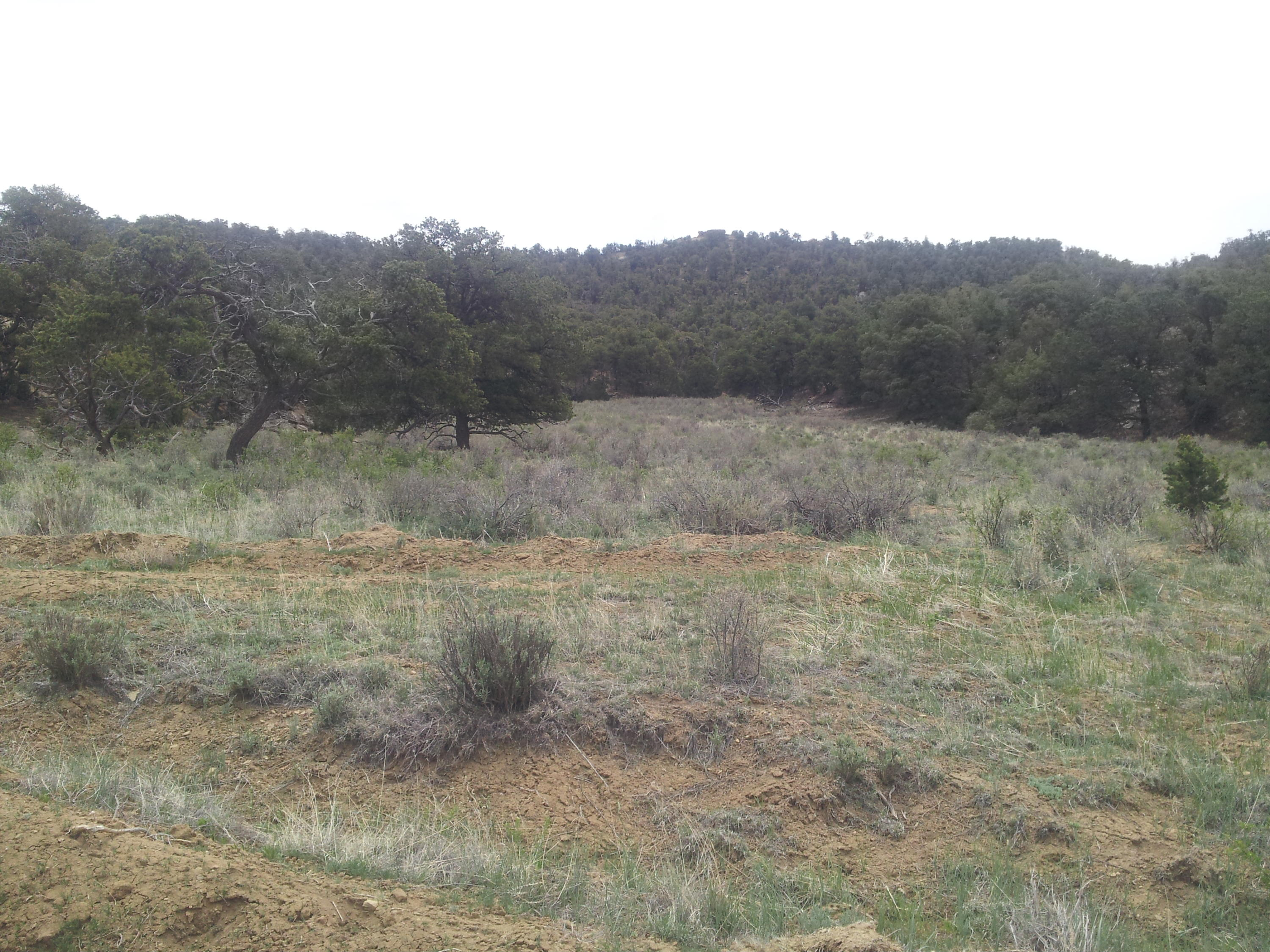 Broken Arrow Court Road Property Photo - Pie Town, NM real estate listing