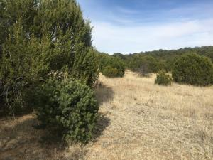 Lost Valley Loop, Cedar Crest, NM 87008 - Cedar Crest, NM real estate listing