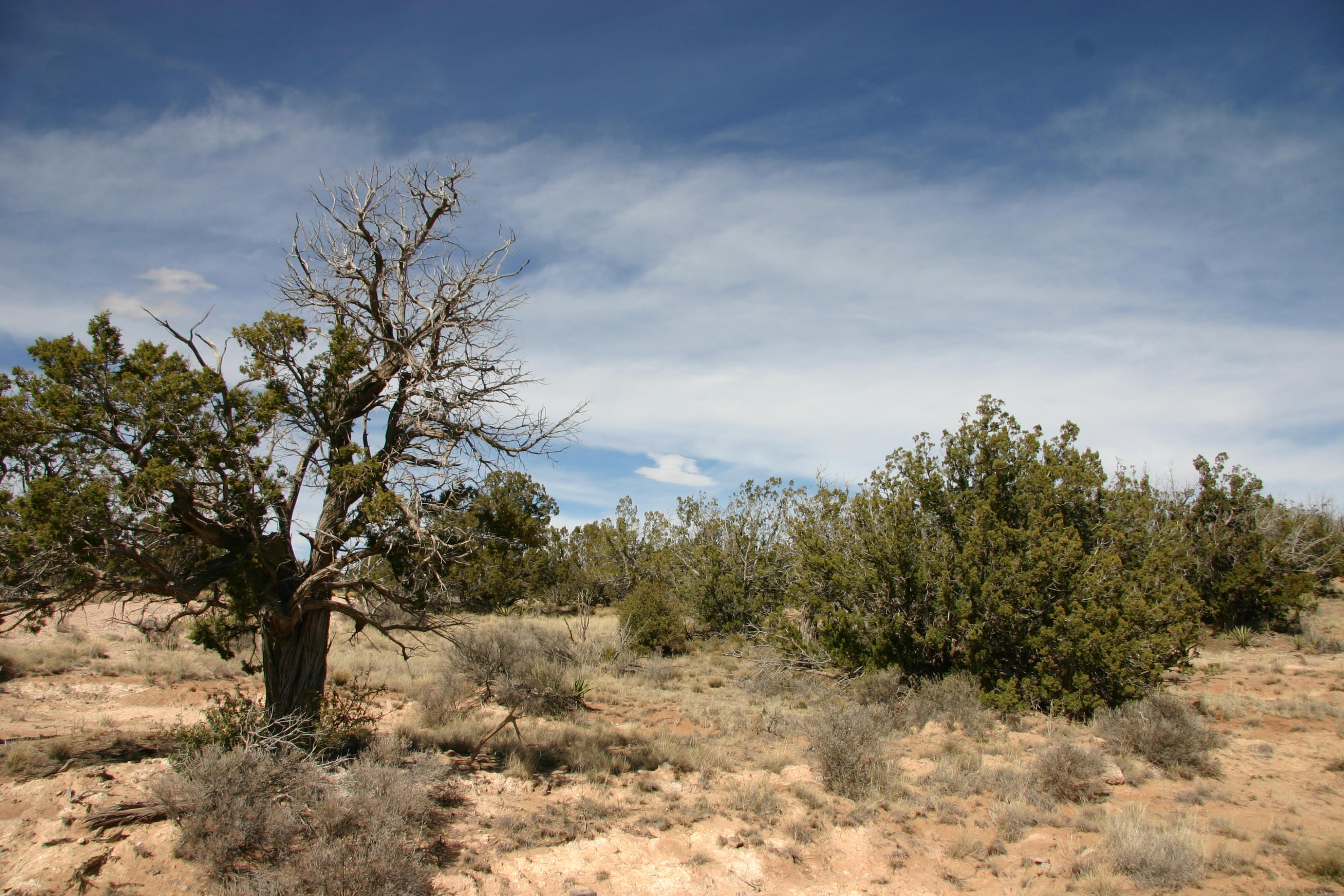 3 San Mateo Trail Lot 46 Trail Property Photo - Mountainair, NM real estate listing