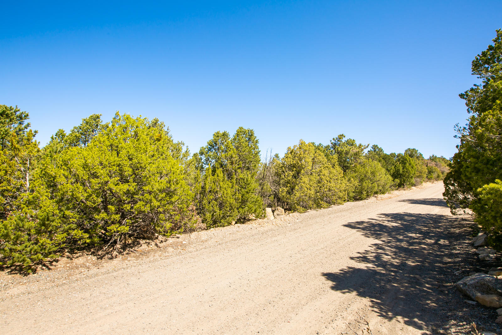 25 RIDGE Drive Property Photo - Cedar Crest, NM real estate listing