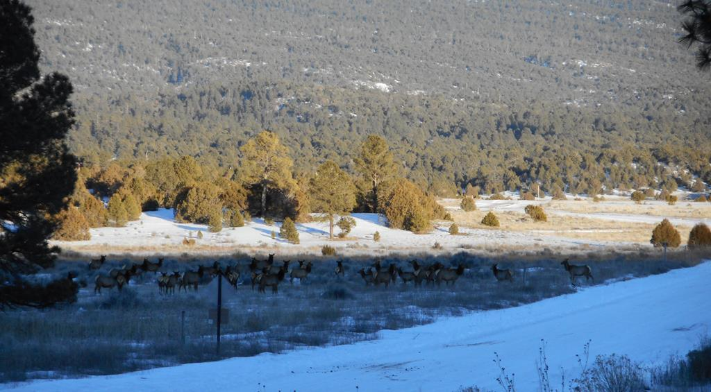 55 Pinetree Road Property Photo - Ramah, NM real estate listing