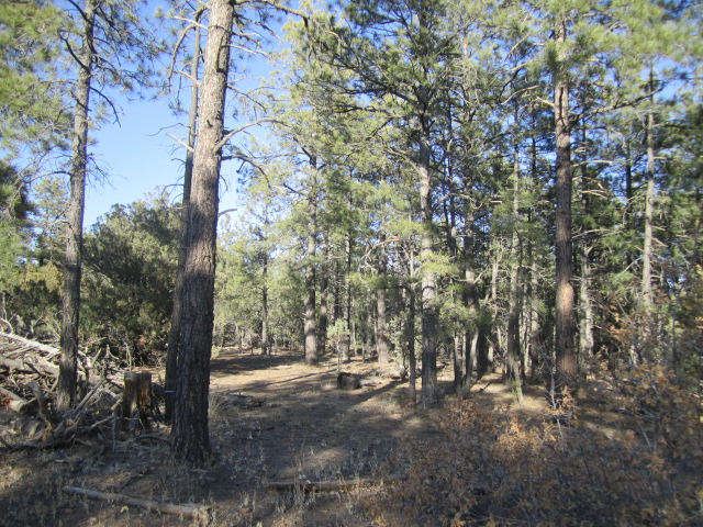 21 ESTRELLA VISTA Drive Property Photo - Tijeras, NM real estate listing