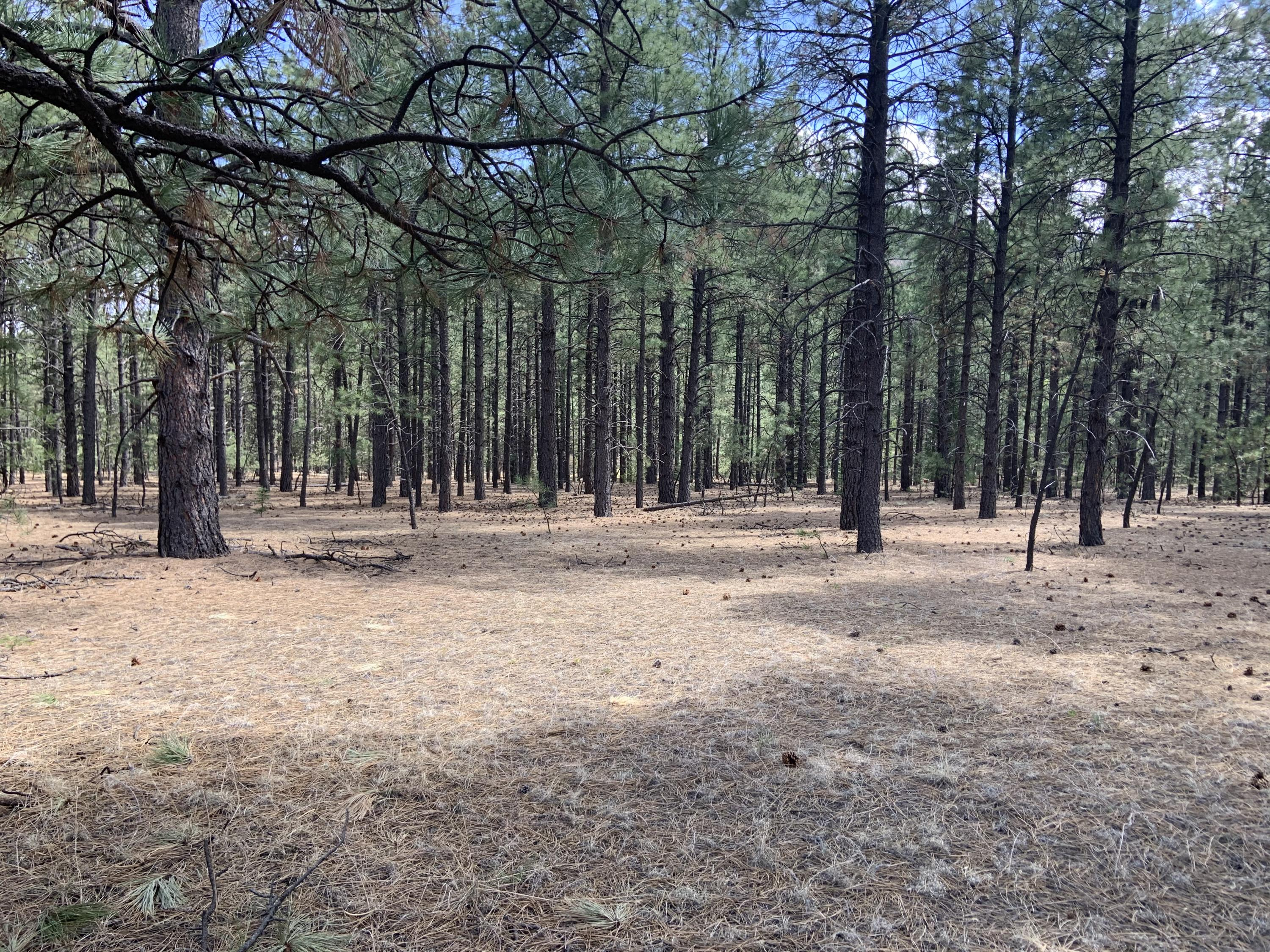 68 Trumbell Canyon Road Property Photo - Mora, NM real estate listing