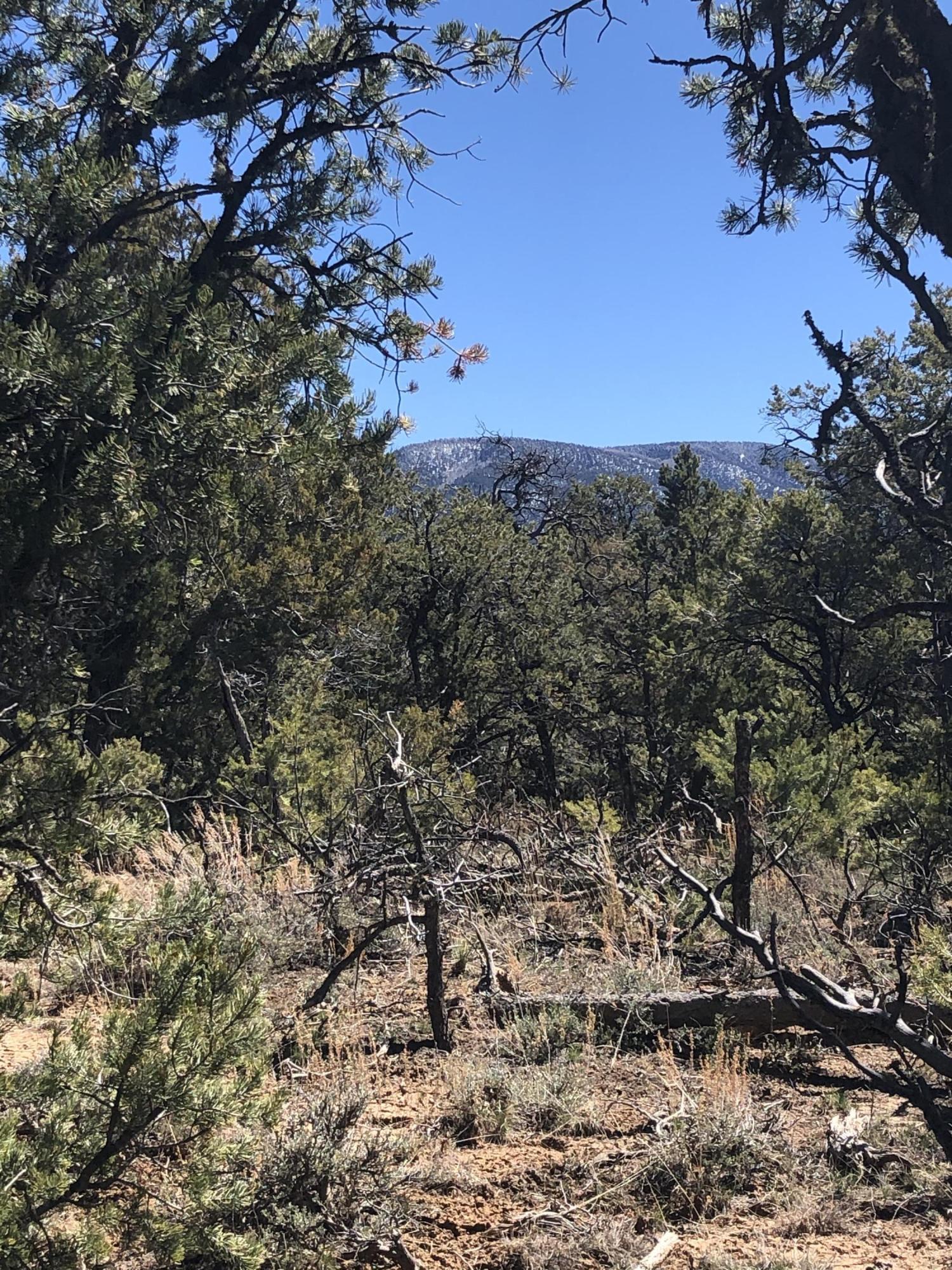 XX Naranjo Road, La Jara, NM 87027 - La Jara, NM real estate listing