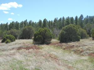 County Rd B 062 Property Photo - Mountainair, NM real estate listing