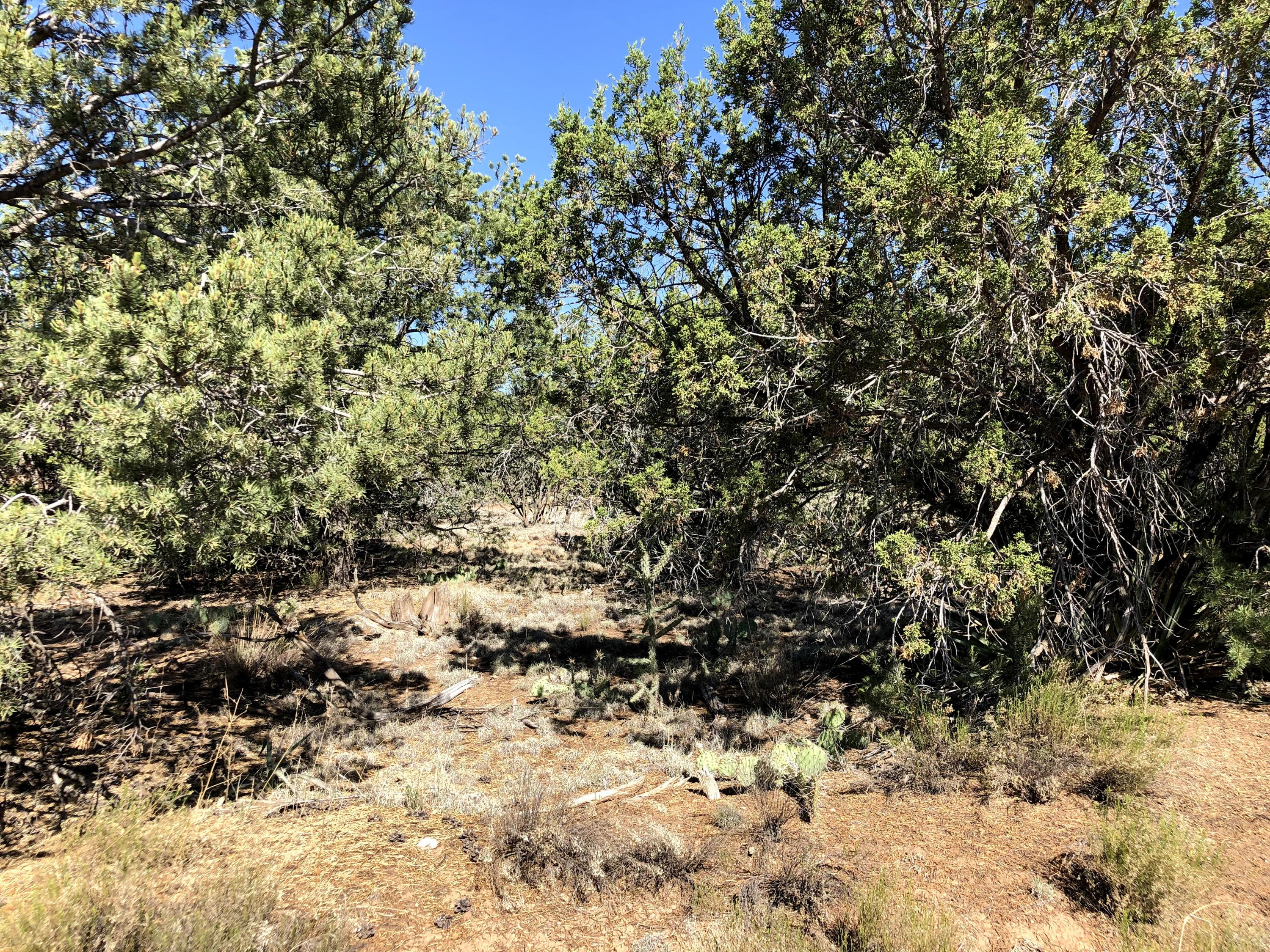 Bryant Road Property Photo - Edgewood, NM real estate listing