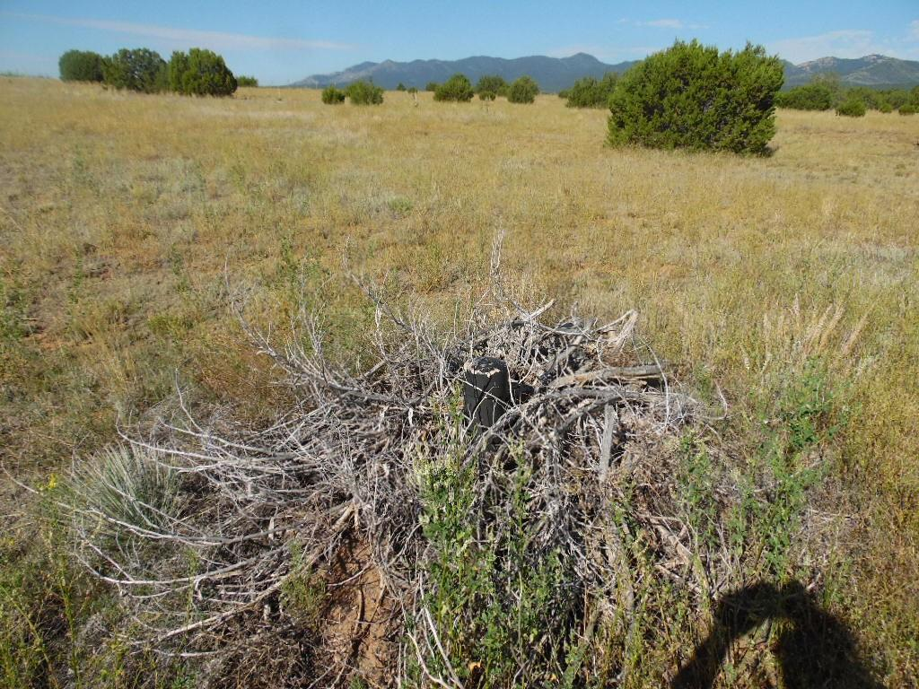 10 Pines Road Property Photo - Torreon, NM real estate listing