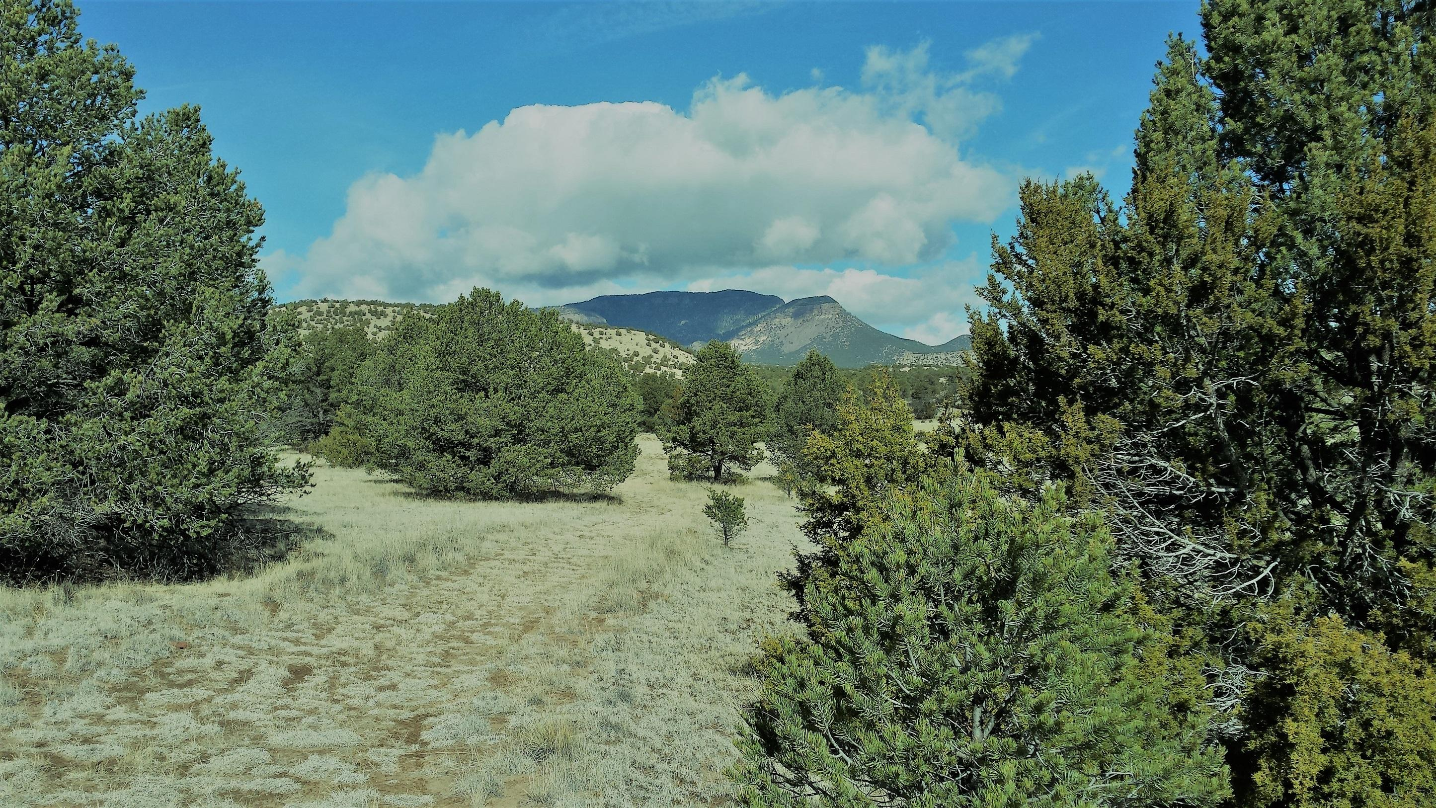 88 RUTTER RANCH Road Property Photo - Datil, NM real estate listing