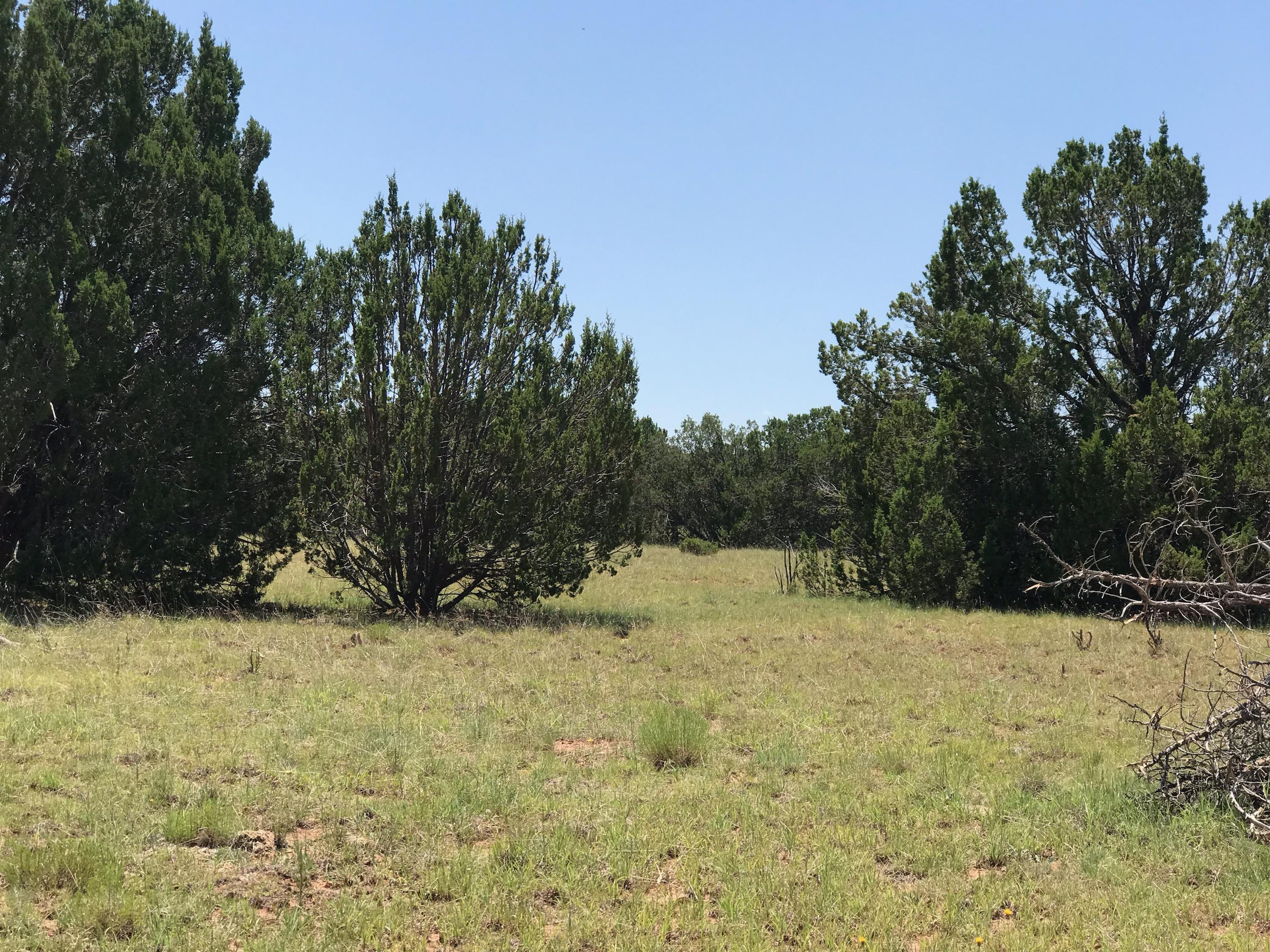 0 Los Novios Road Property Photo - Santa Rosa, NM real estate listing