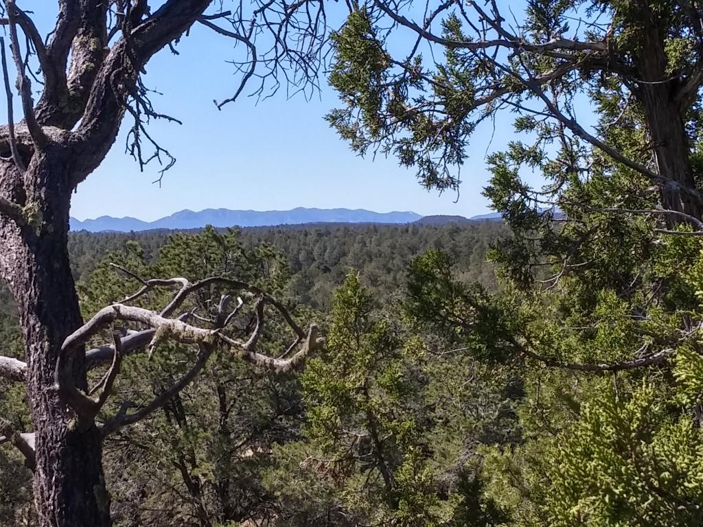 U2 Lot 21 Wild Horse Ranch Property Photo - Pie Town, NM real estate listing