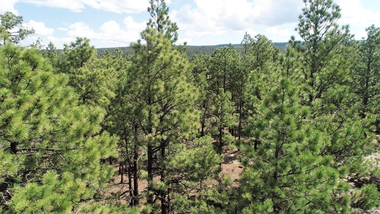 79 Leaning Pine Lane Property Photo - Ramah, NM real estate listing