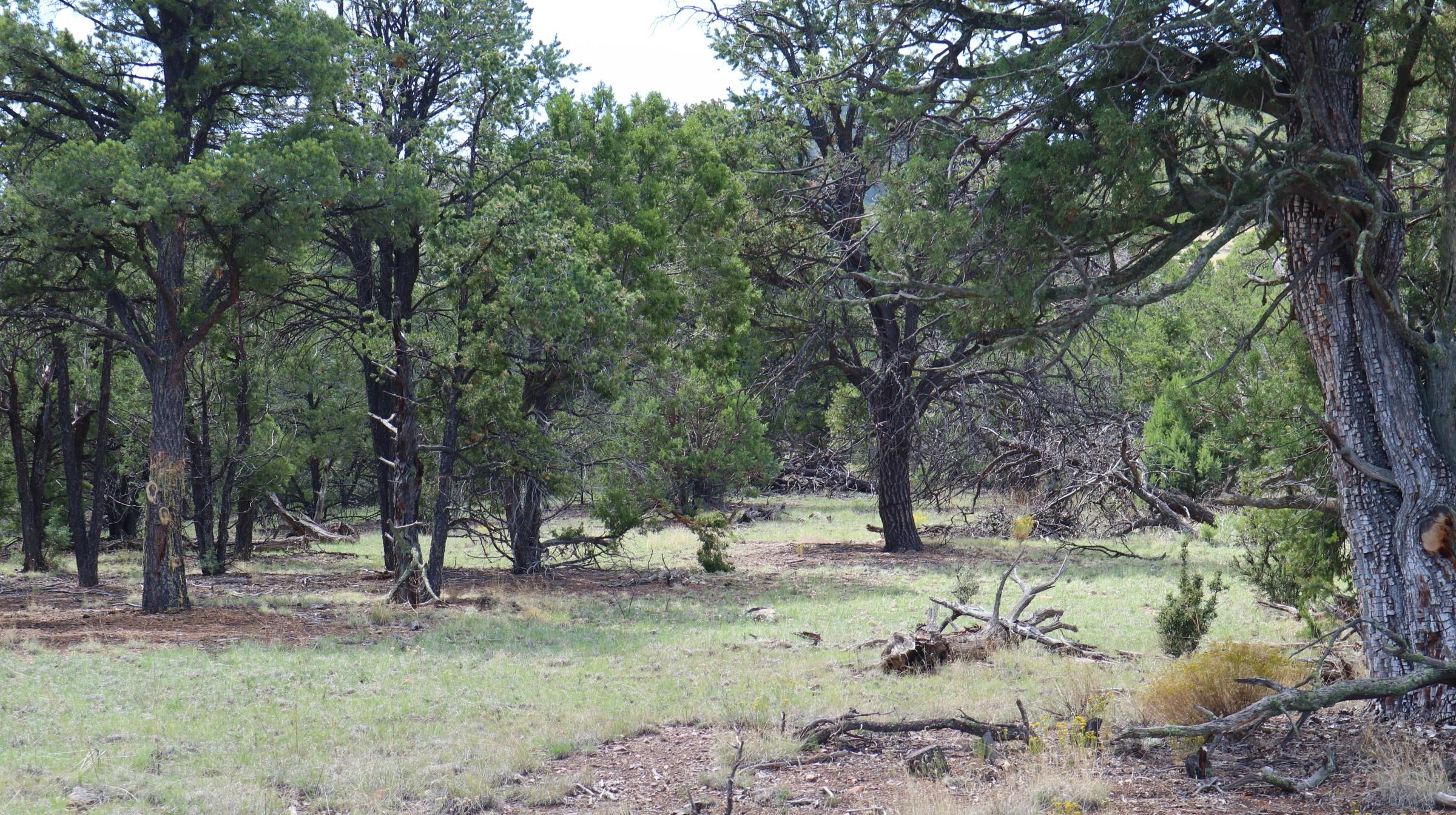 lot 5 Wilderness Circle Property Photo - Datil, NM real estate listing