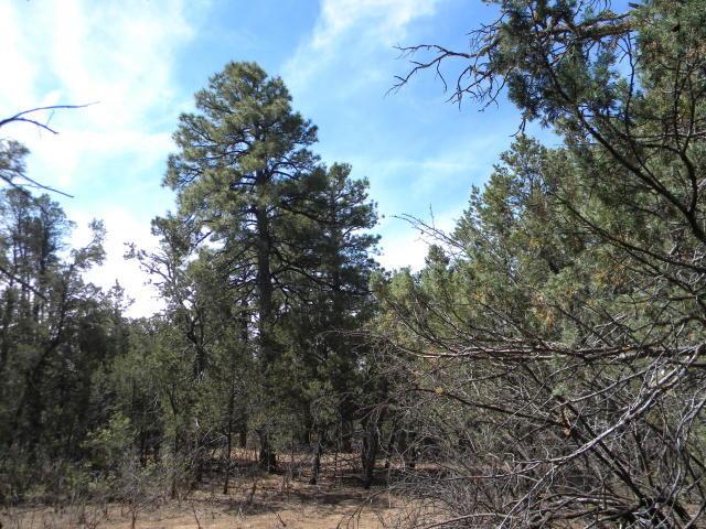 80 BUCKBOARD Road Property Photo - Tijeras, NM real estate listing