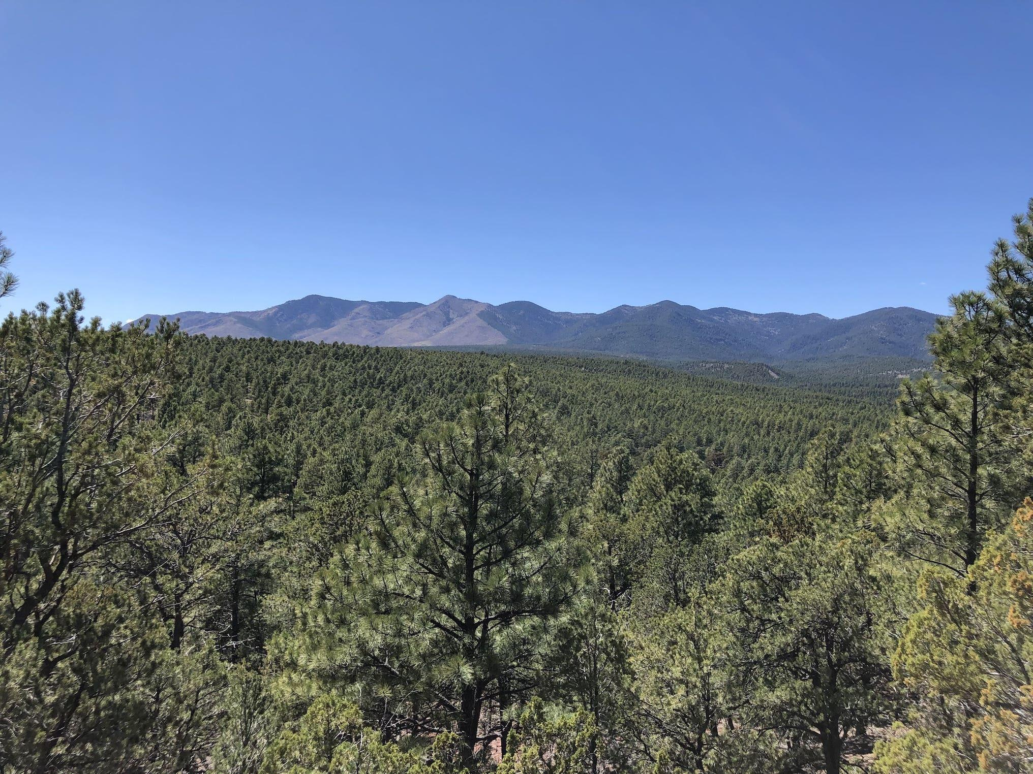 Lot 7 St Hwy 131 Property Photo - Manzano, NM real estate listing
