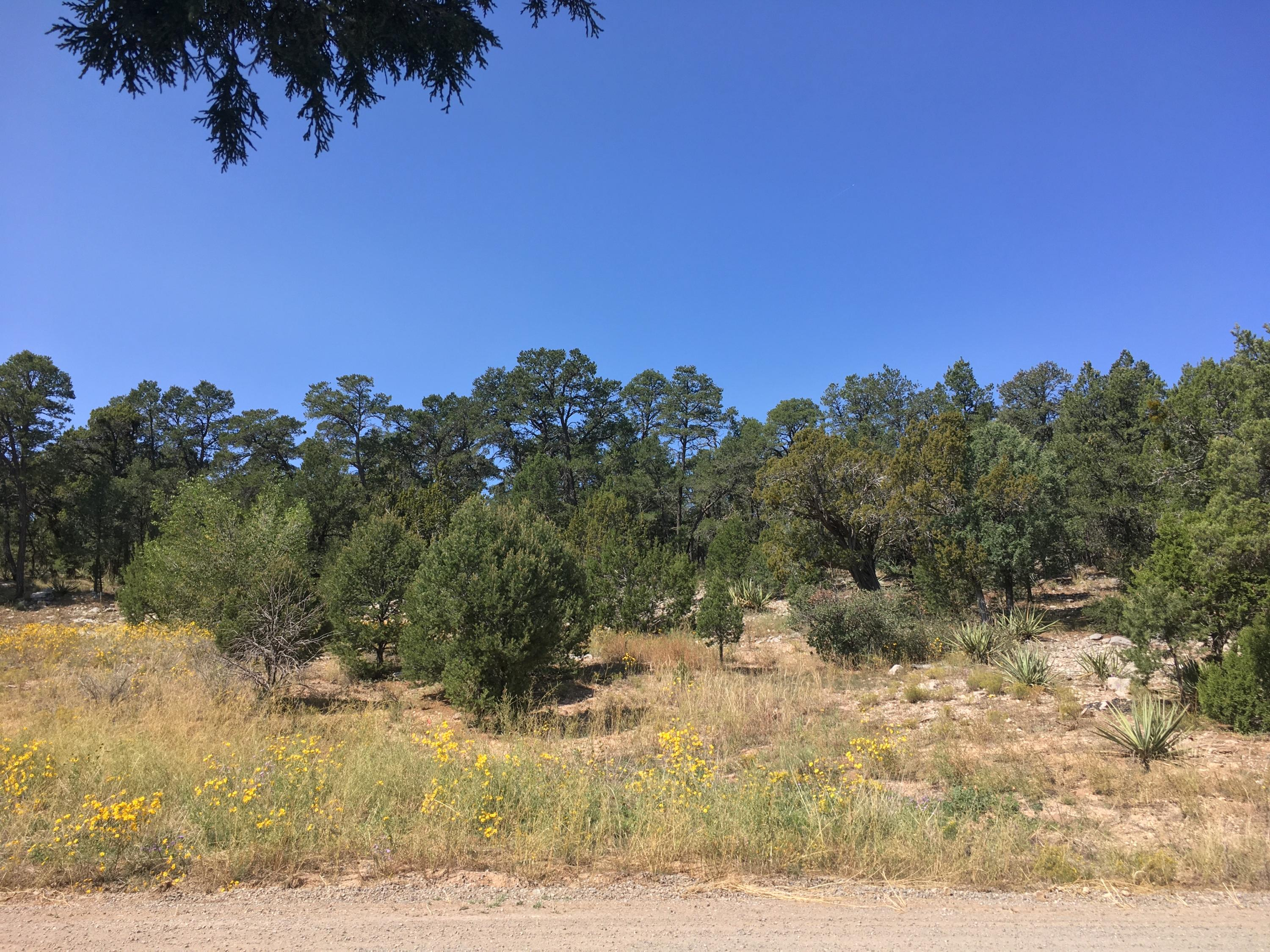 Ogaz Loop Property Photo - Edgewood, NM real estate listing