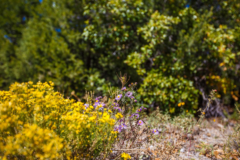 32 GRANNY CANYON Trail Property Photo - Tijeras, NM real estate listing