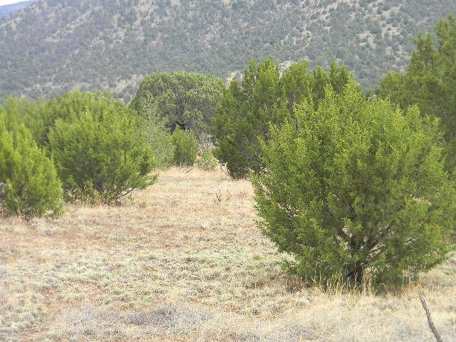 Galilee Subdivision Property Photo - Magdalena, NM real estate listing