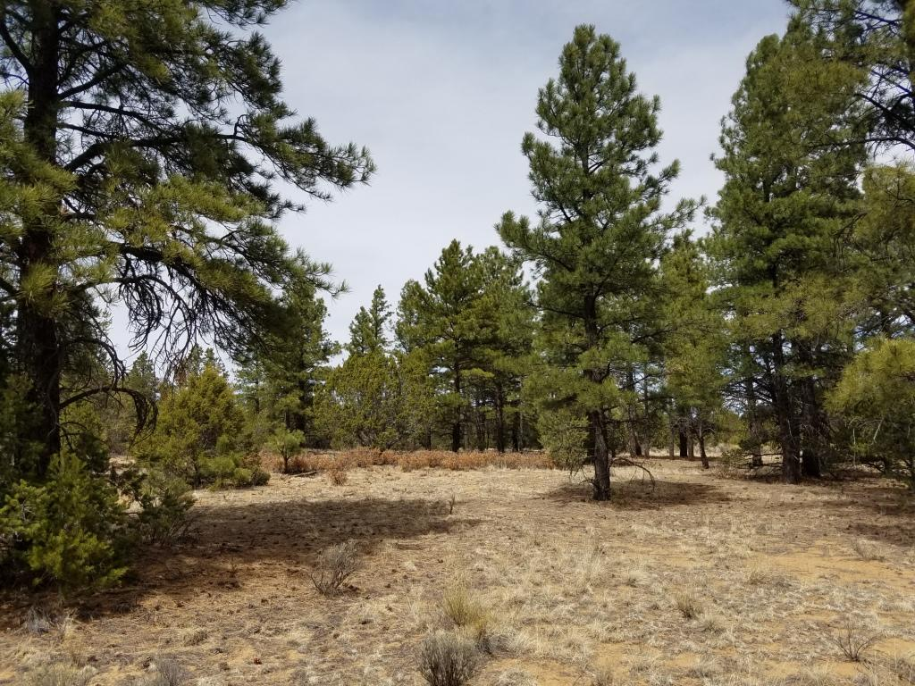 U1 Lot 18 Wild Horse Ranch Property Photo