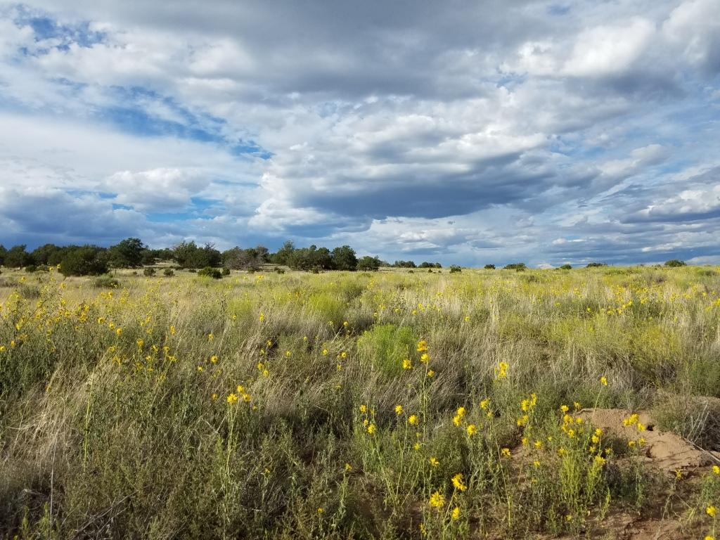 Lot 108 Indian Springs Property Photo