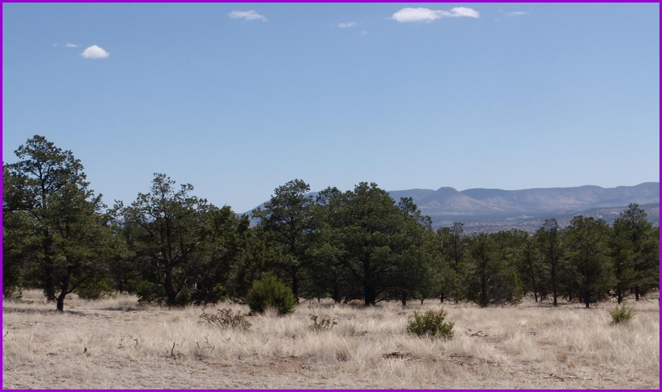 1 Last Frontier Trail Property Photo - Datil, NM real estate listing