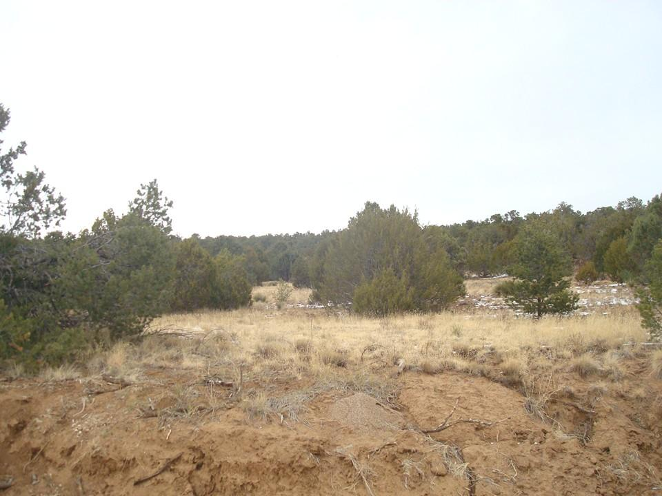 Torreon Heights Rd Property Photo - Torreon, NM real estate listing