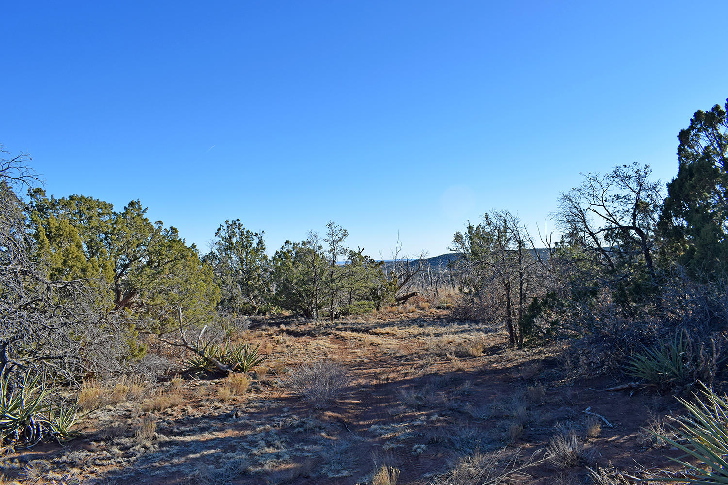 Lot 25 Roadrunner Court #1 Property Photo - Tajique, NM real estate listing