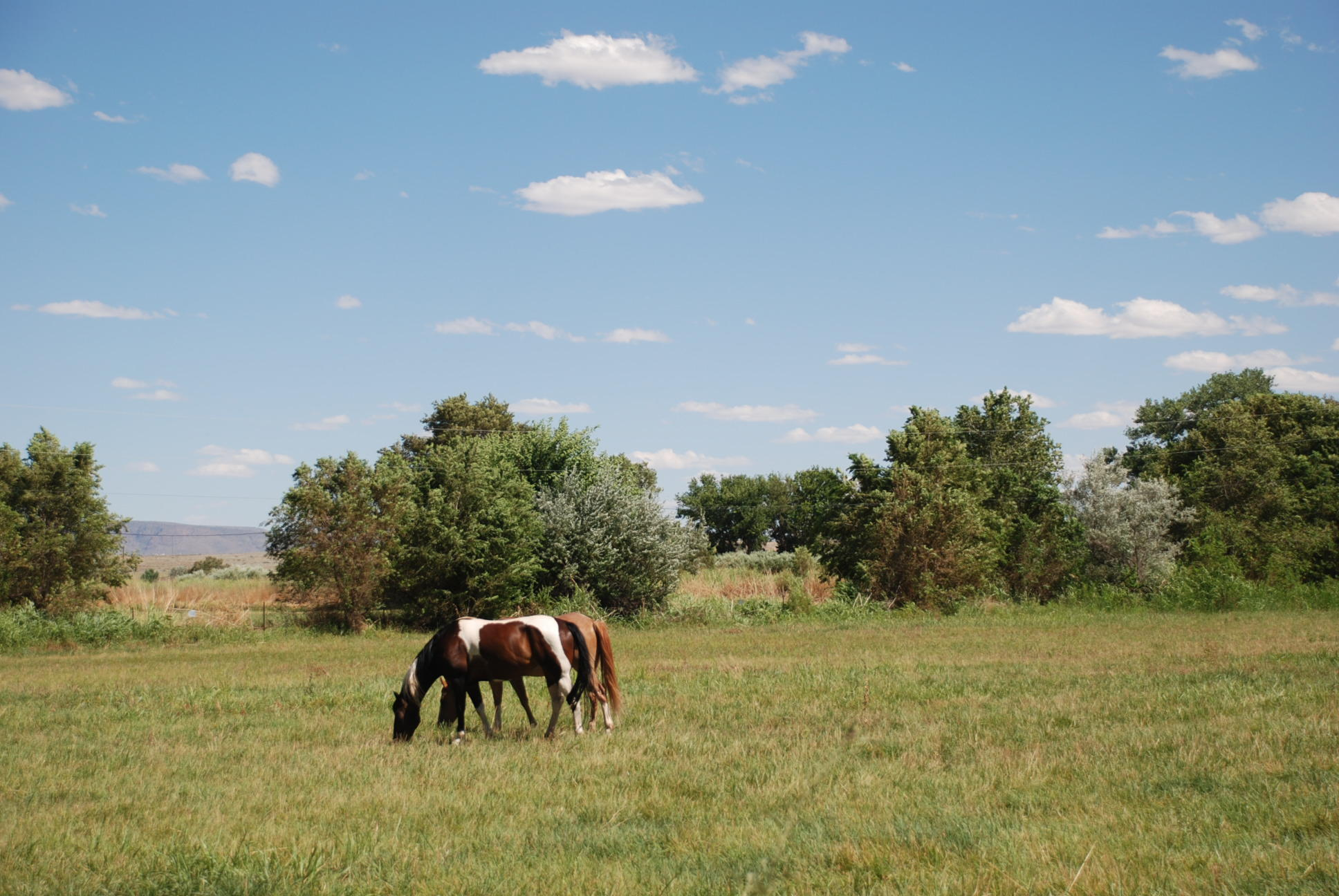 Camino Ulibarri Property Photo - Veguita, NM real estate listing