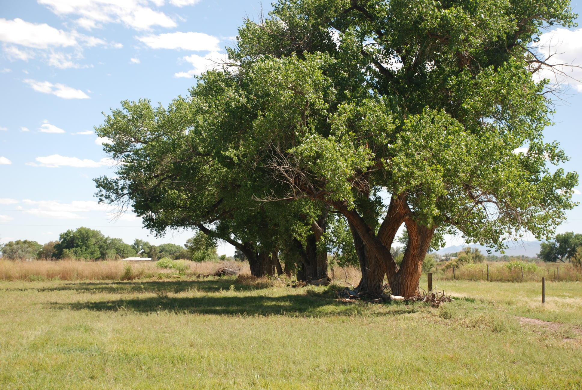 000 Camino Ulibarri Property Photo - Veguita, NM real estate listing