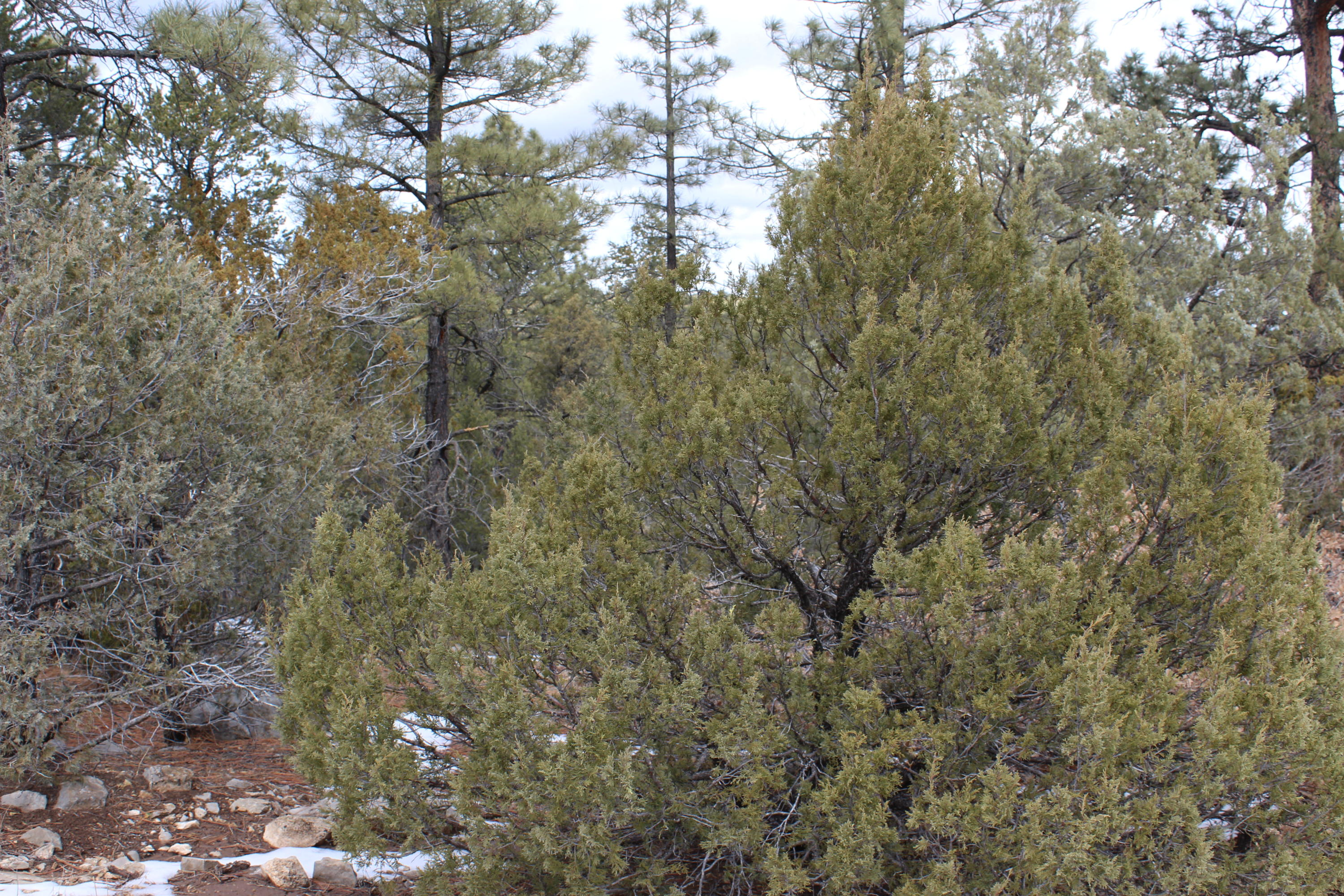 5 Camp Fire Trail Property Photo - Edgewood, NM real estate listing