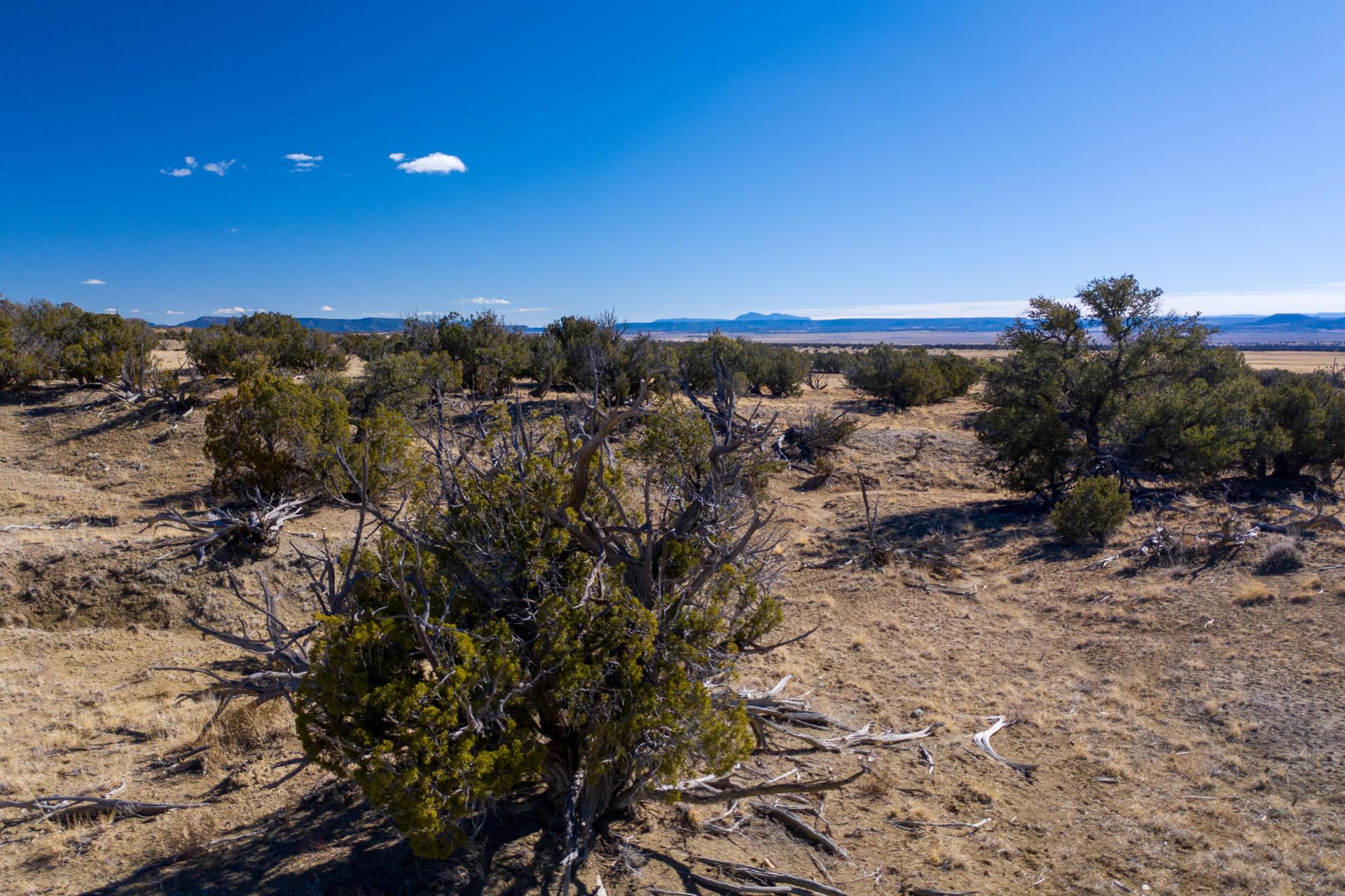 0 N Pueblo Way Property Photo - Quemado, NM real estate listing