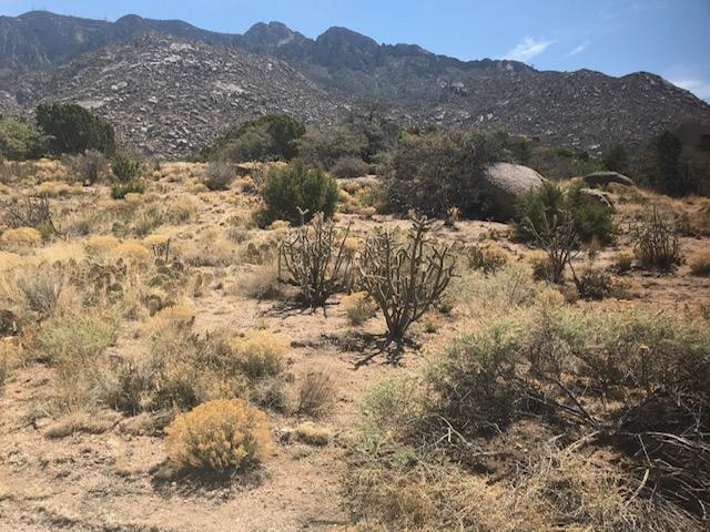 217 SPRING CREEK Lane NE Property Photo - Albuquerque, NM real estate listing