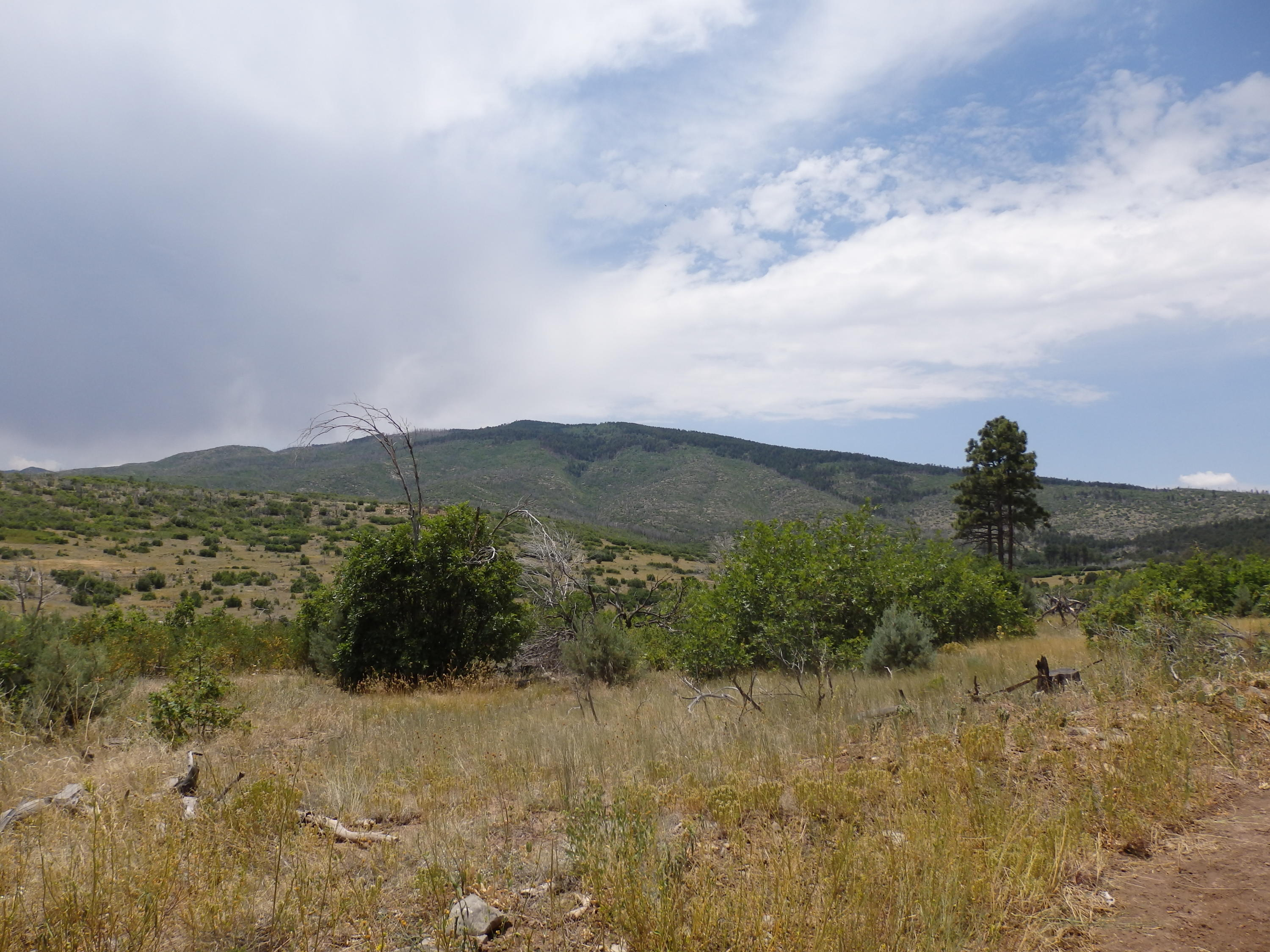 Questa (A008) Road Property Photo - Torreon, NM real estate listing