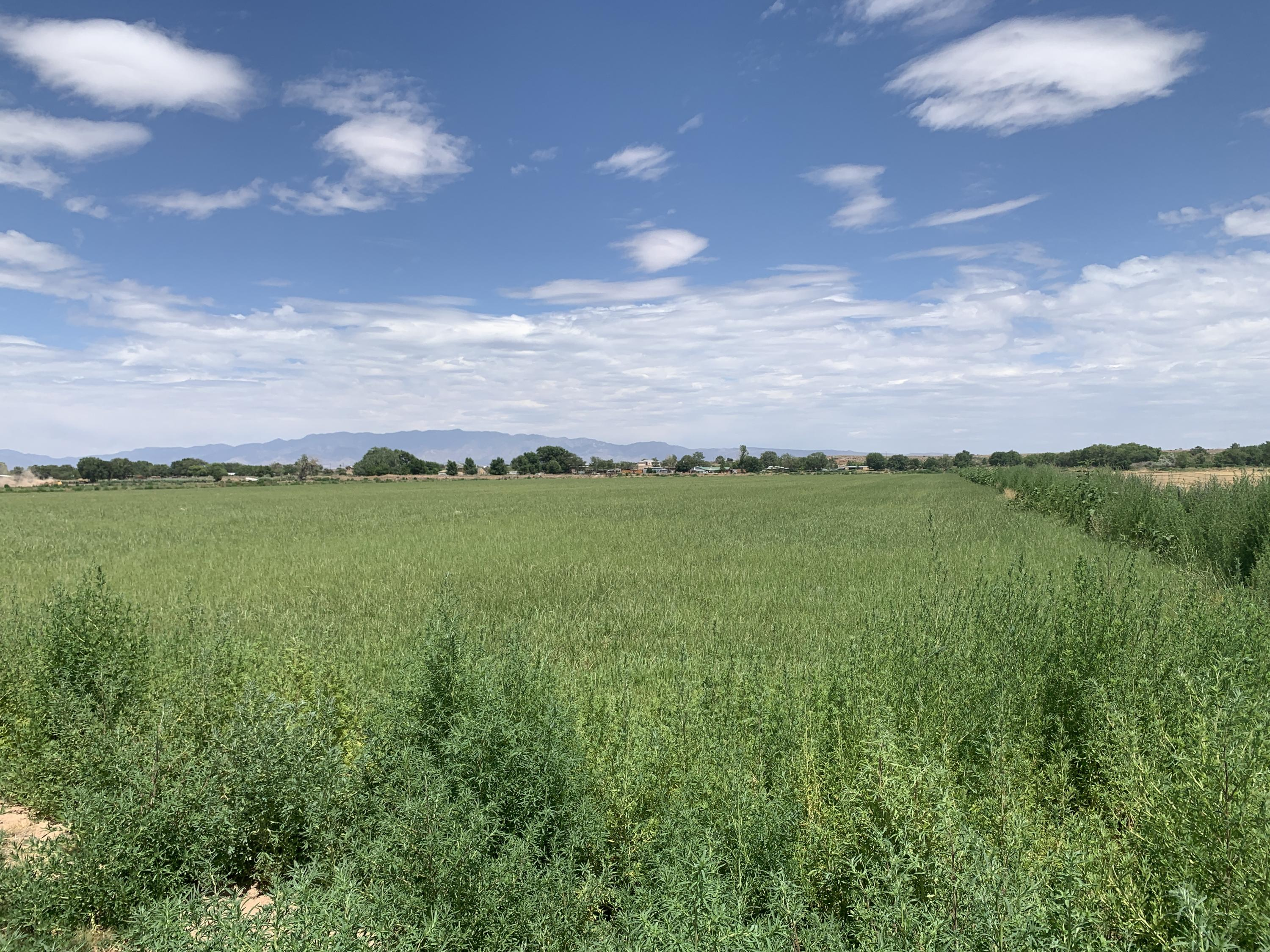 Carrillo Road Property Photo - Veguita, NM real estate listing
