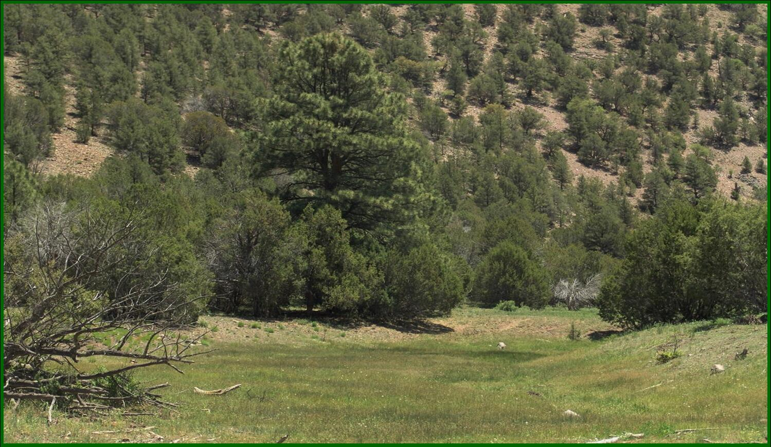 29 Hwy 12 Property Photo - Aragon, NM real estate listing