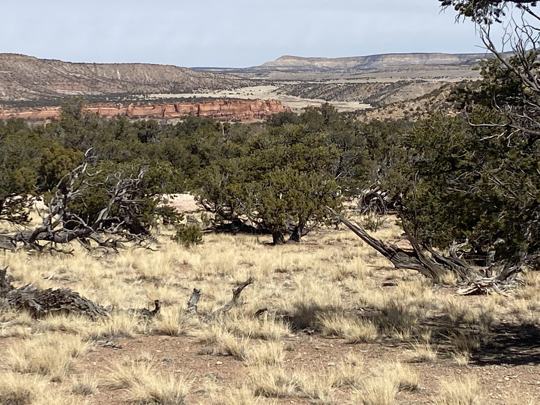 Lot 14 Triple R Ranches Property Photo - Prewitt, NM real estate listing