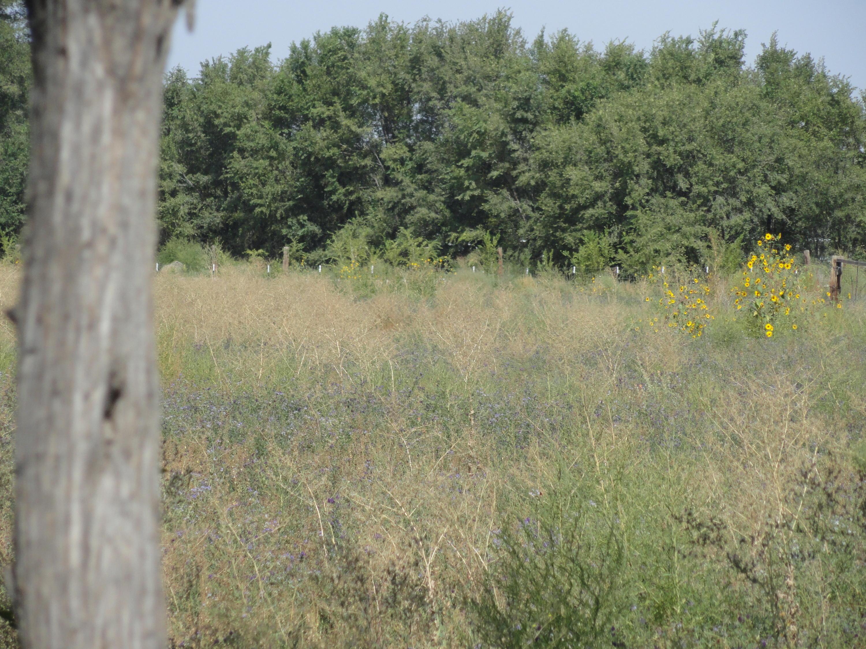 Molina Road Tract 1 Property Photo