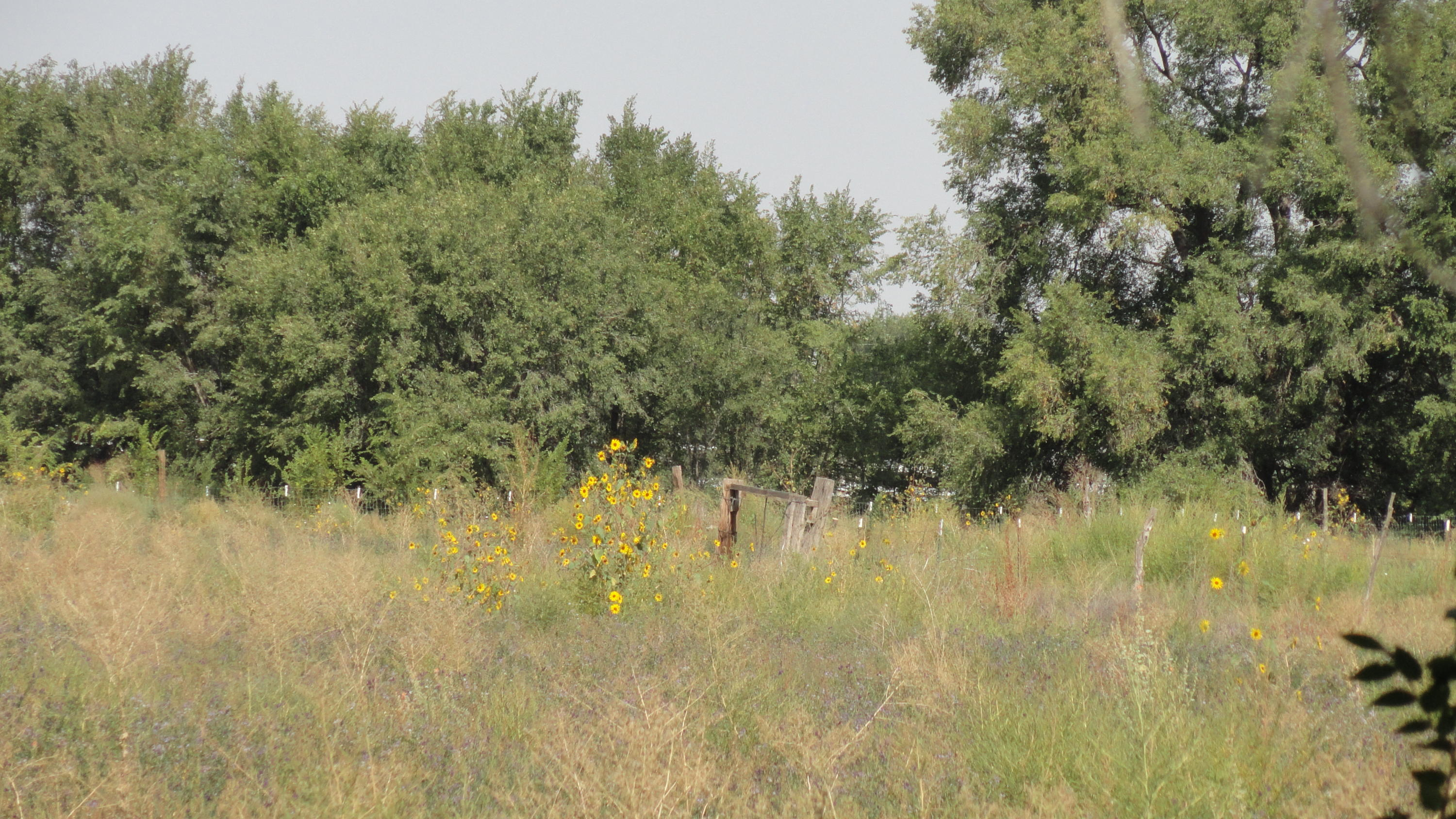 Molina Road Tract A1B Property Photo - Peralta, NM real estate listing