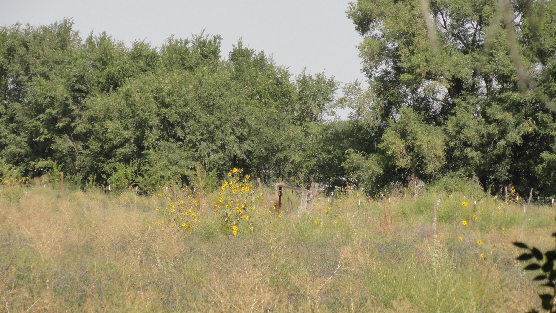 Molina Road Tract A1b Property Photo