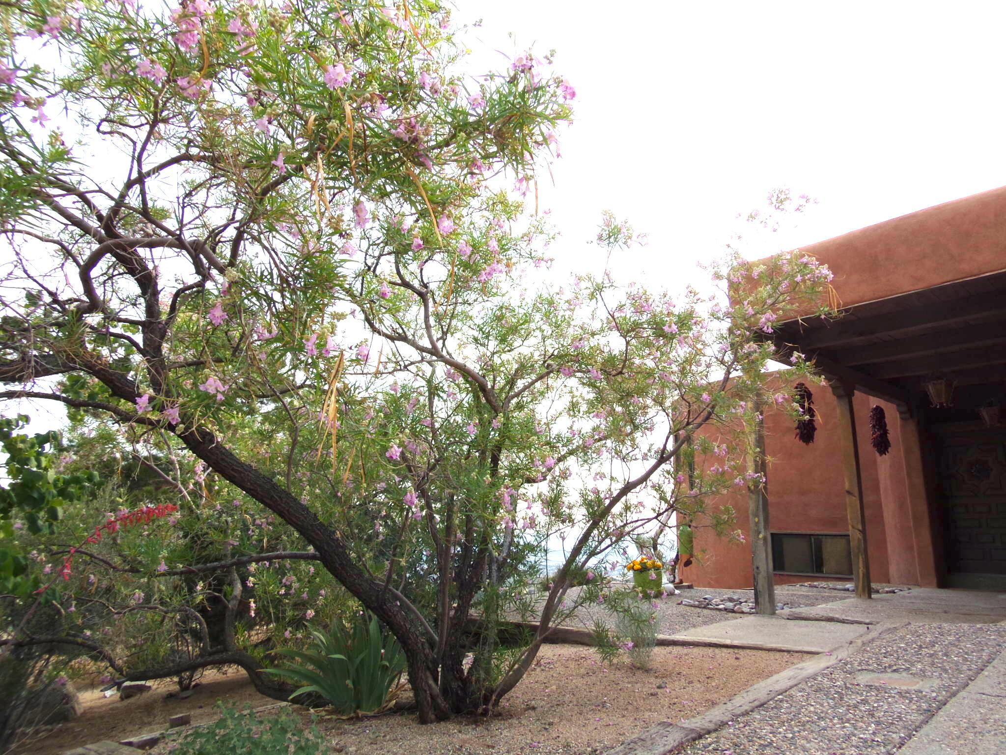 41 Tierra Monte Drive Ne Property Photo