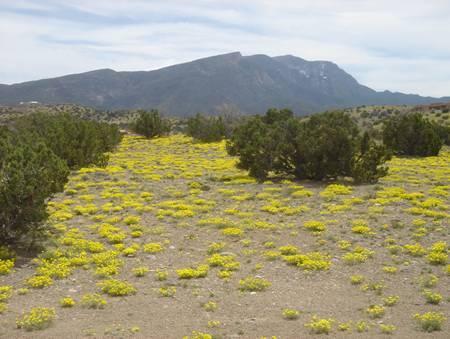 Camino Sandia Property Photo