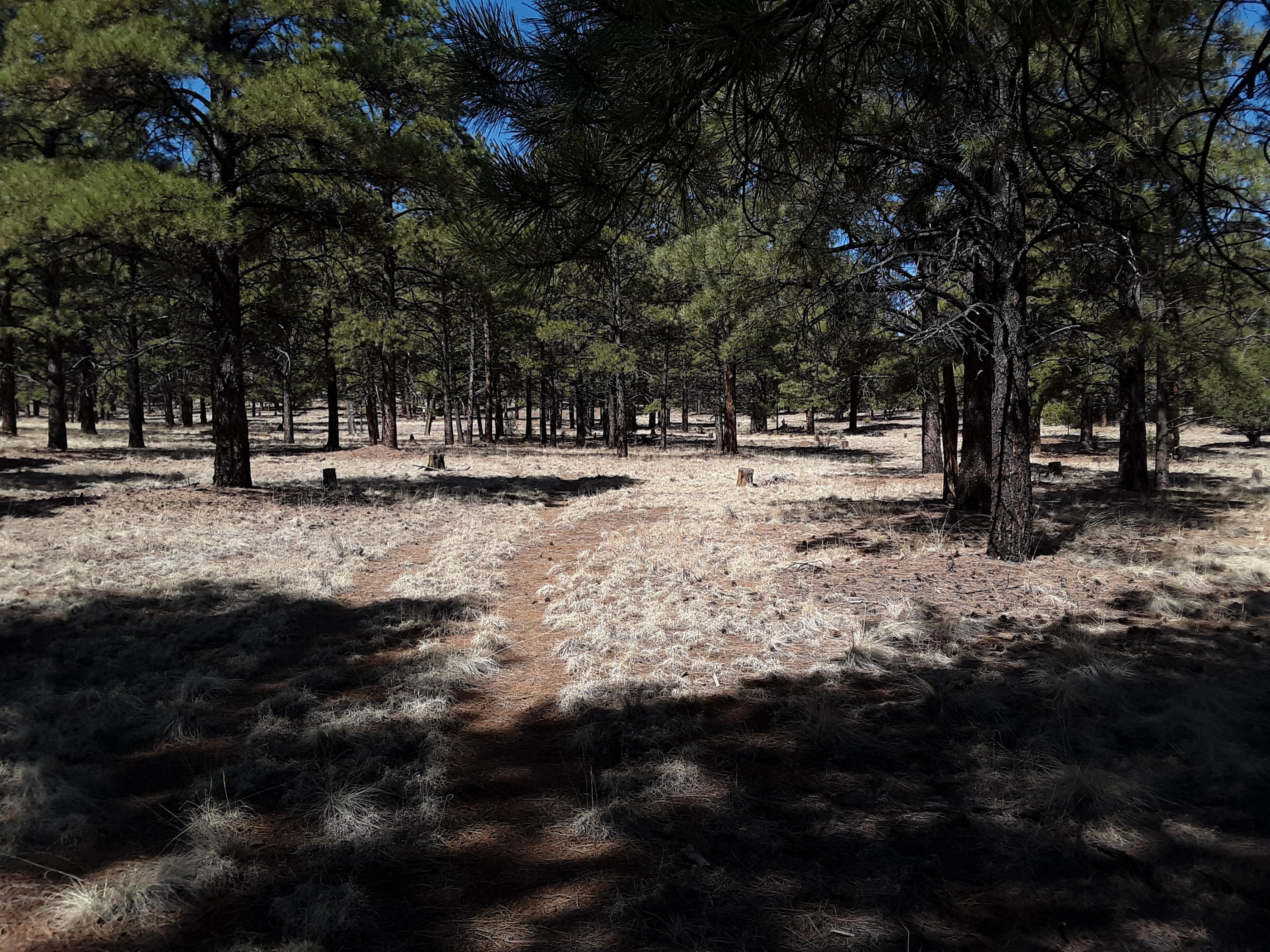 LITTLE BEAR Road Property Photo - Grants, NM real estate listing