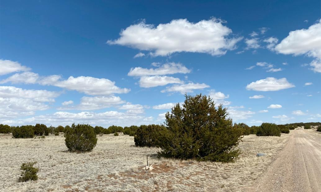 Lot 15 Mission Hills Property Photo - Estancia, NM real estate listing