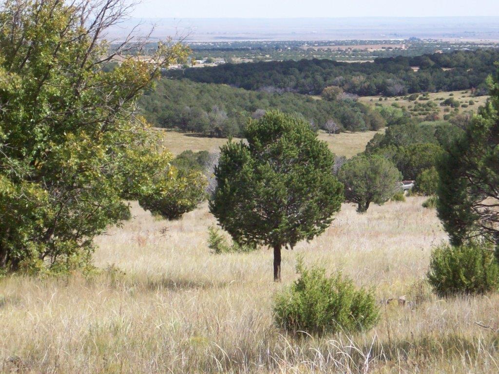 Camino De Las Palas Property Photo - Torreon, NM real estate listing