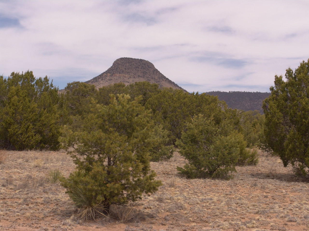 432 SOUTHERN Trail Property Photo - Datil, NM real estate listing
